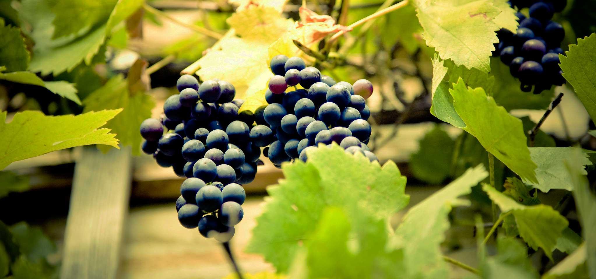 gustiamo-i-sapori-del-buon-vino